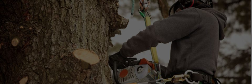 We are able to handle all aspects of tree management.